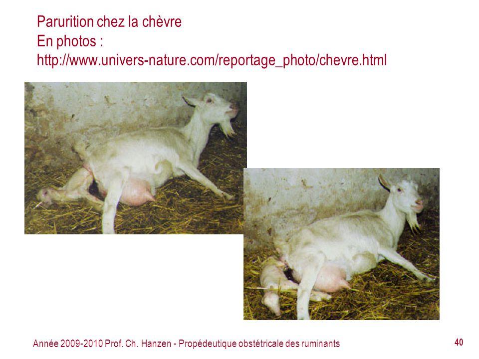 Année 2009-2010 Prof. Ch. Hanzen - Propédeutique obstétricale des ruminants 40 Parurition chez la chèvre En photos : http://www.univers-nature.com/rep