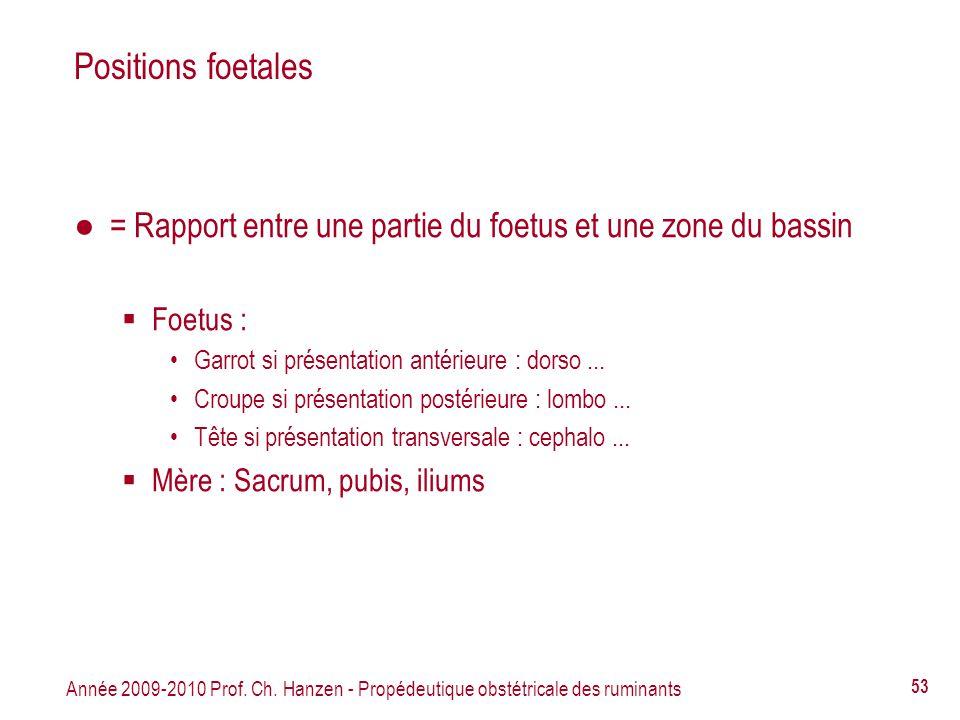 Année 2009-2010 Prof. Ch. Hanzen - Propédeutique obstétricale des ruminants 53 Positions foetales = Rapport entre une partie du foetus et une zone du
