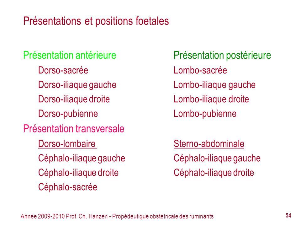 Année 2009-2010 Prof. Ch. Hanzen - Propédeutique obstétricale des ruminants 54 Présentations et positions foetales Présentation antérieurePrésentation