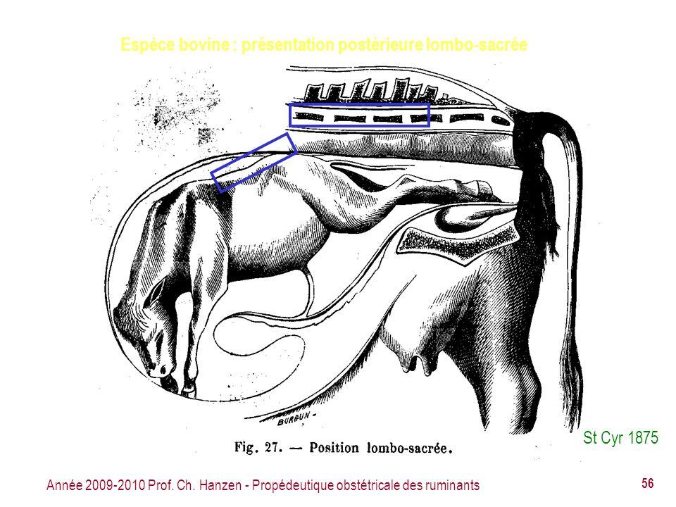 Année 2009-2010 Prof. Ch. Hanzen - Propédeutique obstétricale des ruminants 56 Espèce bovine : présentation postérieure lombo-sacrée St Cyr 1875