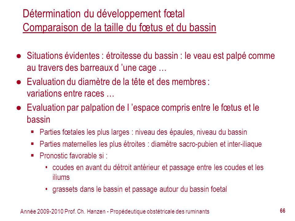 Année 2009-2010 Prof. Ch. Hanzen - Propédeutique obstétricale des ruminants 66 Détermination du développement fœtal Comparaison de la taille du fœtus