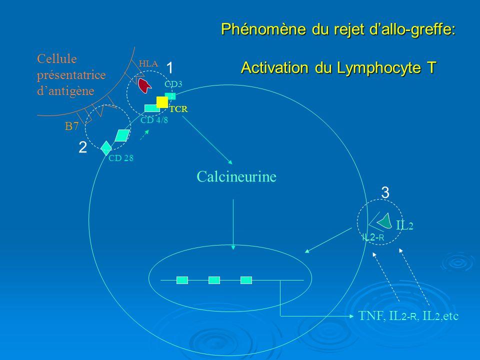 Associations d immunosuppresseurs CsA / TRL purine AZA MPA SRL / EVRL IL2,TNF,etc IL2 CD3 TCR (OKT3) / ATG Lymphocyte T Anti- IL2R CD28 BELATACEPT