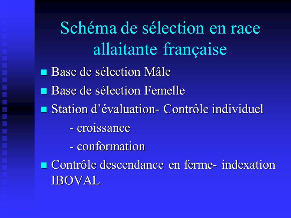 Schéma de sélection en race allaitante française Base de sélection Mâle Base de sélection Mâle Base de sélection Femelle Base de sélection Femelle Sta