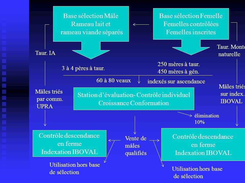 Base sélection Mâle Rameau lait et rameau viande séparés Base sélection Femelle Femelles contrôlées Femelles inscrites Station dévaluation- Contrôle i