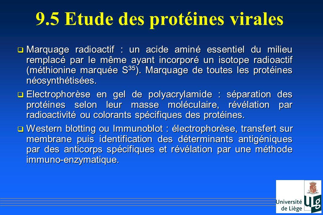 9.5 Etude des protéines virales Marquage radioactif : un acide aminé essentiel du milieu remplacé par le même ayant incorporé un isotope radioactif (m