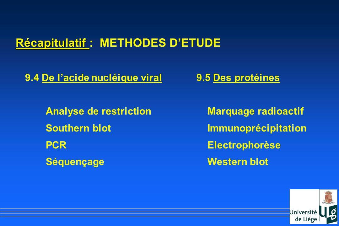 Récapitulatif Récapitulatif : METHODES DETUDE 9.4 De lacide nucléique viral9.5 Des protéines Analyse de restriction Marquage radioactif Southern blot