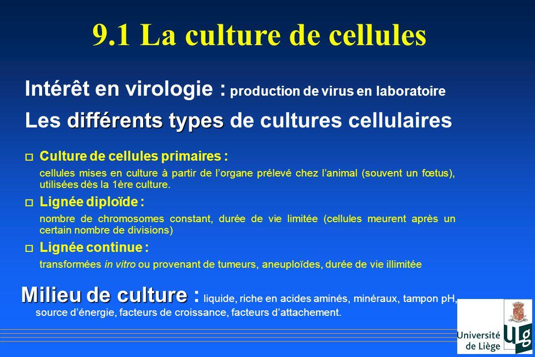 Intérêt en virologie : production de virus en laboratoire différents types Les différents types de cultures cellulaires o Culture de cellules primaire