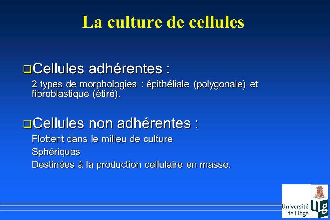 La culture de cellules Cellules adhérentes : Cellules adhérentes : 2 types de morphologies : épithéliale (polygonale) et fibroblastique (étiré). Cellu