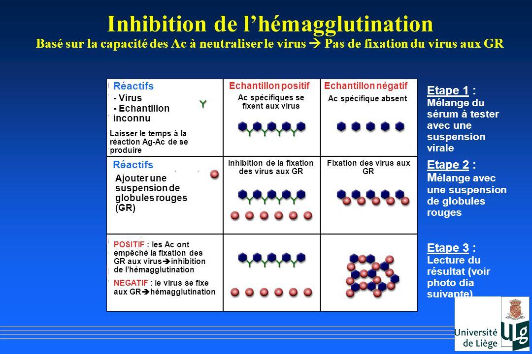 Inhibition de lhémagglutination Basé sur la capacité des Ac à neutraliser le virus Pas de fixation du virus aux GR Réactifs - Virus - Echantillon inco