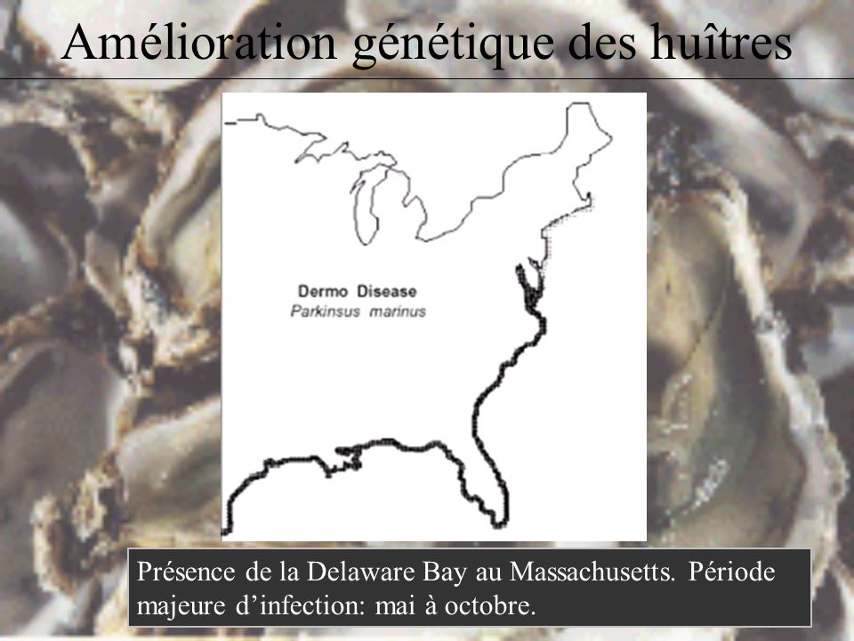 –Dermo: Étiologie: Perkinsus marinus (protozoaire parasite) Les huîtres mortes libèrent le stade infestant, qui est ingéré par de nouveaux individus;
