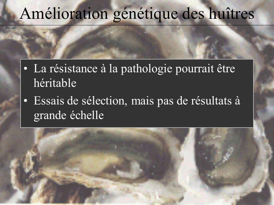 Amélioration génétique des huîtres Présence de la Delaware Bay au Massachusetts. Période majeure dinfection: mai à octobre.