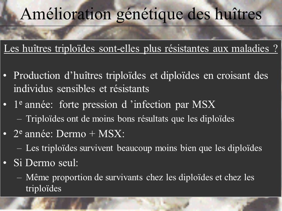 Amélioration génétique des huîtres III. Huîtres triploïdes: Induction dans lécloserie à laide de cytochalasine B (antibiotique empêchant la formation