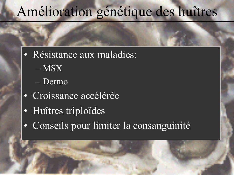 Amélioration génétique des huîtres Résistance aux maladies: –MSX –Dermo Croissance accélérée Huîtres triploïdes Conseils pour limiter la consanguinité