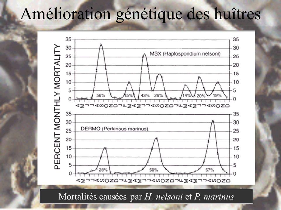 Amélioration génétique des huîtres Mortalités causées par H. nelsoni et P. marinus