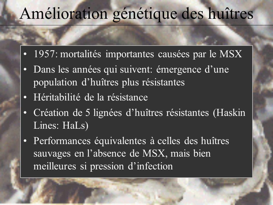 1957: mortalités importantes causées par le MSX Dans les années qui suivent: émergence dune population dhuîtres plus résistantes Héritabilité de la résistance Création de 5 lignées dhuîtres résistantes (Haskin Lines: HaLs) Performances équivalentes à celles des huîtres sauvages en labsence de MSX, mais bien meilleures si pression dinfection Amélioration génétique des huîtres