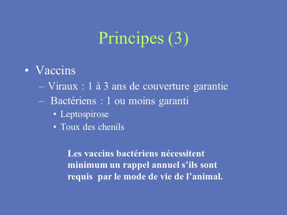 Principes (3) Vaccins –Viraux : 1 à 3 ans de couverture garantie – Bactériens : 1 ou moins garanti Leptospirose Toux des chenils Les vaccins bactérien