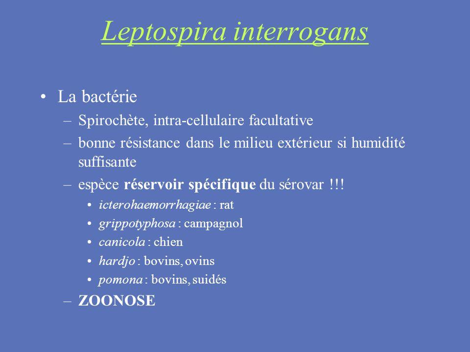 La bactérie –Spirochète, intra-cellulaire facultative –bonne résistance dans le milieu extérieur si humidité suffisante –espèce réservoir spécifique d