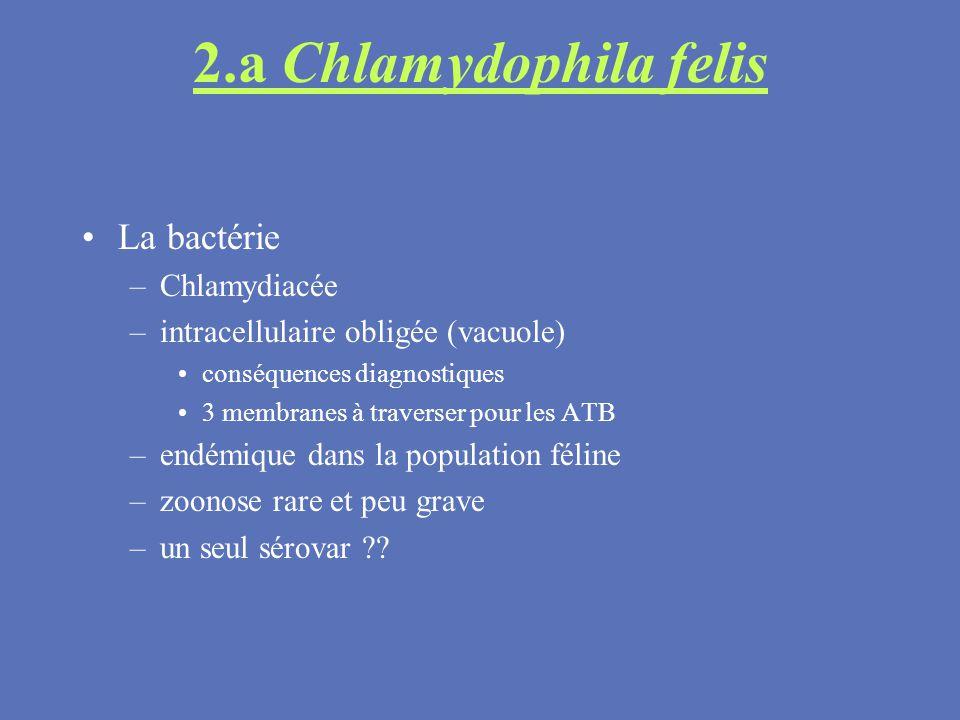 2.a Chlamydophila felis La bactérie –Chlamydiacée –intracellulaire obligée (vacuole) conséquences diagnostiques 3 membranes à traverser pour les ATB –