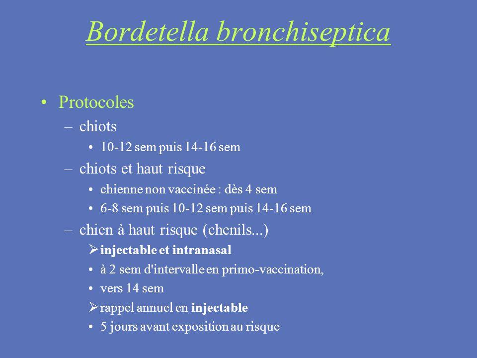 Bordetella bronchiseptica Protocoles –chiots 10-12 sem puis 14-16 sem –chiots et haut risque chienne non vaccinée : dès 4 sem 6-8 sem puis 10-12 sem p