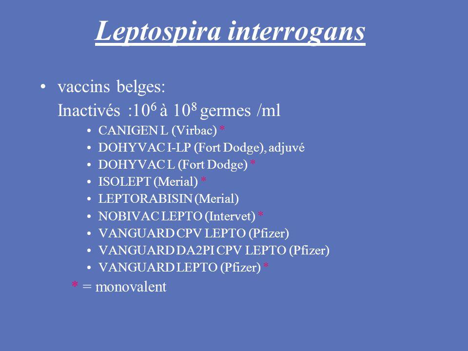 Leptospira interrogans vaccins belges: Inactivés :10 6 à 10 8 germes /ml CANIGEN L (Virbac) * DOHYVAC I-LP (Fort Dodge), adjuvé DOHYVAC L (Fort Dodge)