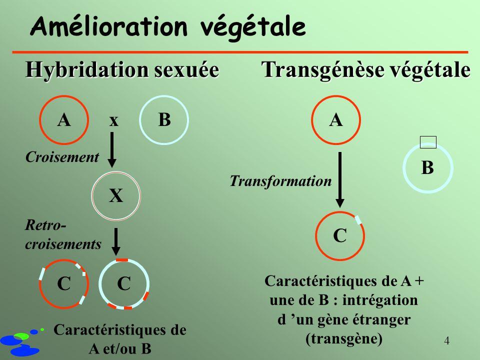 4 Amélioration végétale Hybridation sexuée Transgénèse végétale A Croisement Transformation x A BCX B Caractéristiques de A et/ou B Caractéristiques d