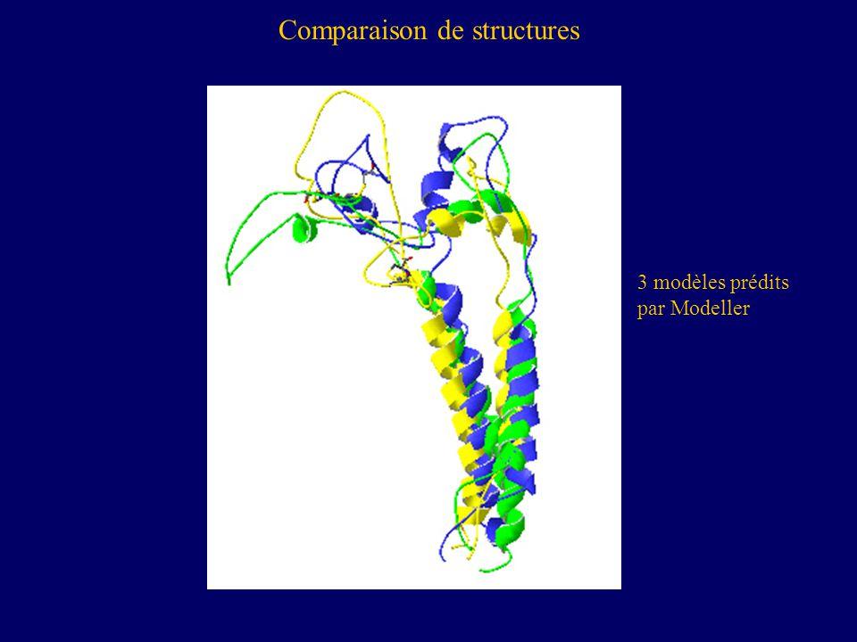 Comparaison de structures 3 modèles prédits par Modeller