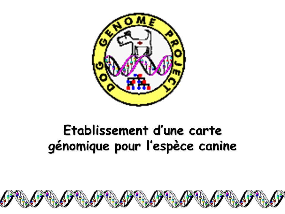 Etablissement dune carte génomique pour lespèce canine