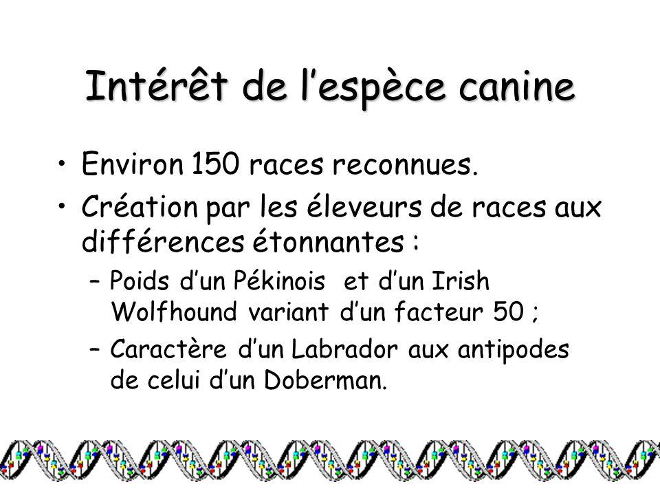Intérêt de lespèce canine Environ 150 races reconnues. Création par les éleveurs de races aux différences étonnantes : –Poids dun Pékinois et dun Iris