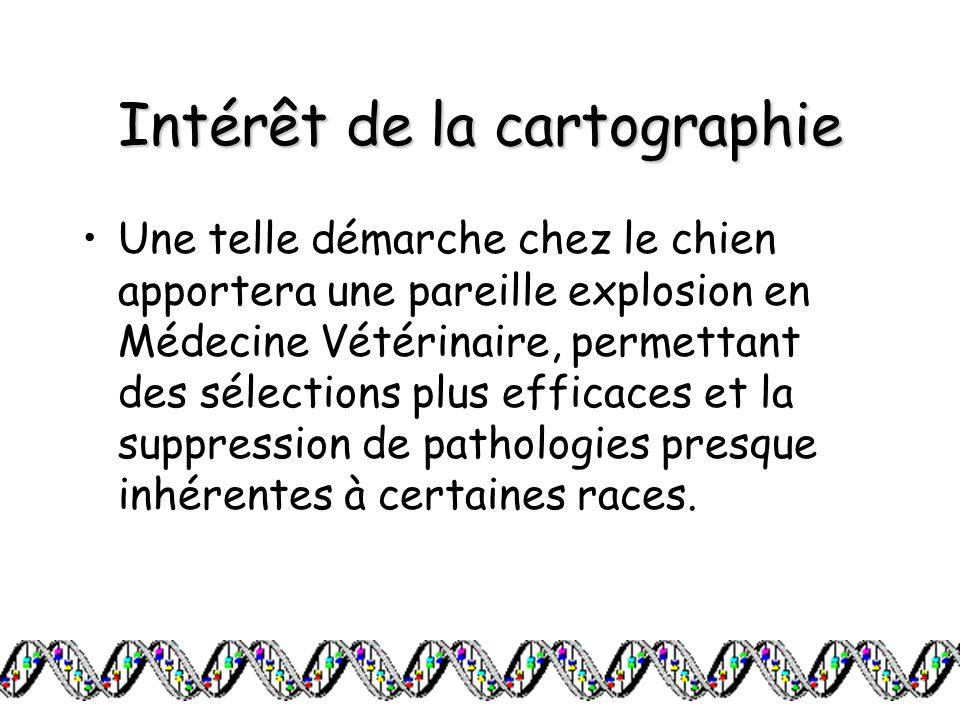 Intérêt de la cartographie Une telle démarche chez le chien apportera une pareille explosion en Médecine Vétérinaire, permettant des sélections plus e