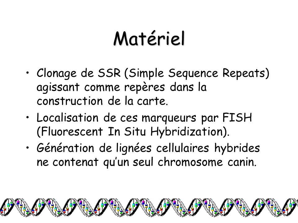 Matériel Clonage de SSR (Simple Sequence Repeats) agissant comme repères dans la construction de la carte. Localisation de ces marqueurs par FISH (Flu
