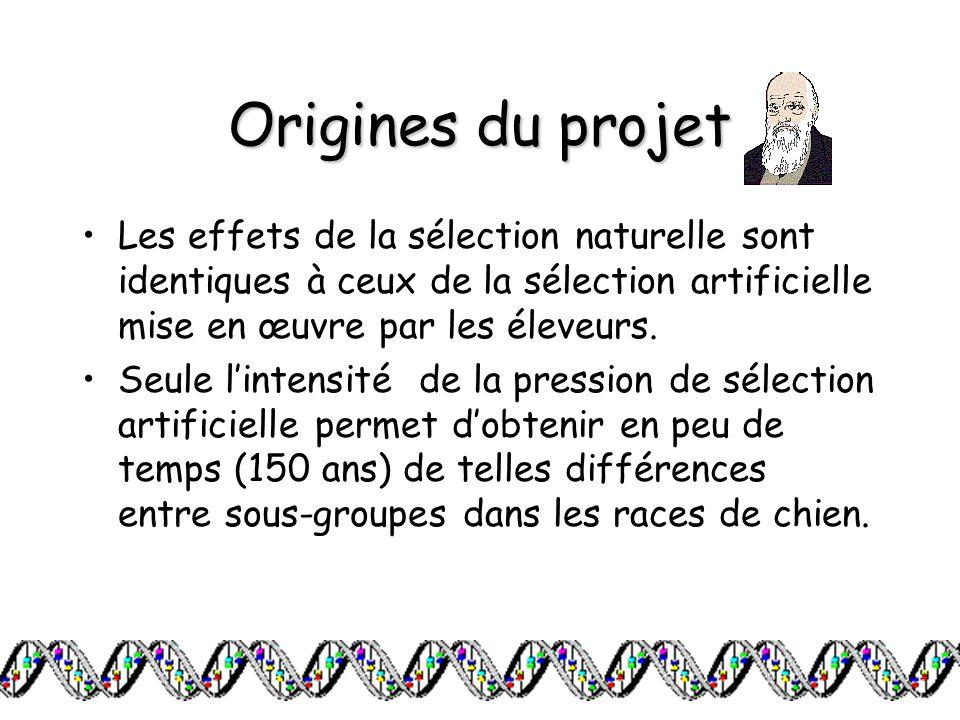 Origines du projet Les effets de la sélection naturelle sont identiques à ceux de la sélection artificielle mise en œuvre par les éleveurs. Seule lint