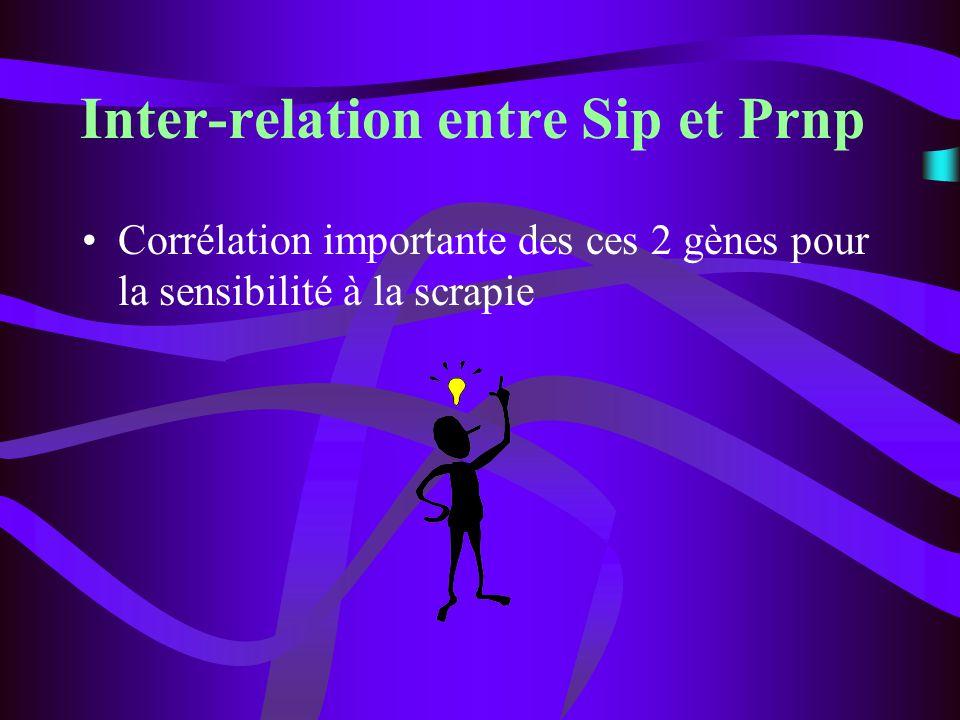 Inter-relation entre Sip et Prnp Corrélation importante des ces 2 gènes pour la sensibilité à la scrapie