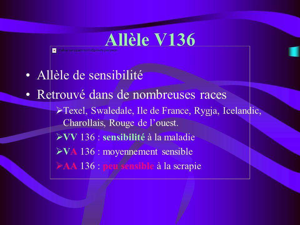 Allèle V136 Allèle de sensibilité Retrouvé dans de nombreuses races Texel, Swaledale, Ile de France, Rygja, Icelandic, Charollais, Rouge de louest. VV