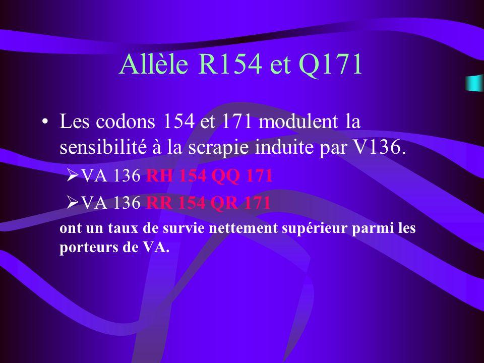 Allèle R154 et Q171 Les codons 154 et 171 modulent la sensibilité à la scrapie induite par V136. VA 136 RH 154 QQ 171 VA 136 RR 154 QR 171 ont un taux