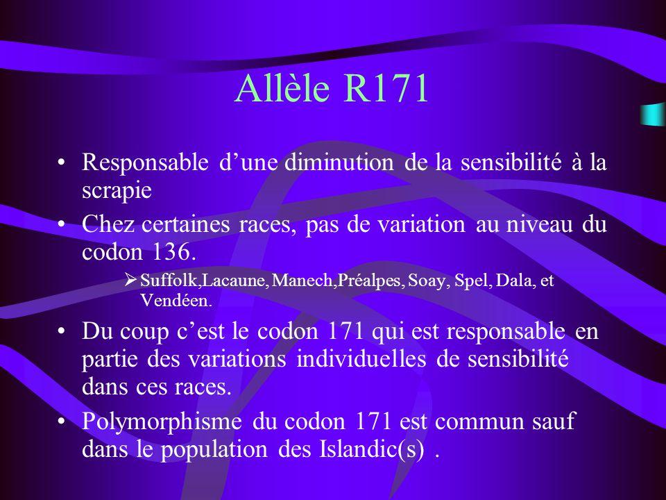 Allèle R171 Responsable dune diminution de la sensibilité à la scrapie Chez certaines races, pas de variation au niveau du codon 136. Suffolk,Lacaune,