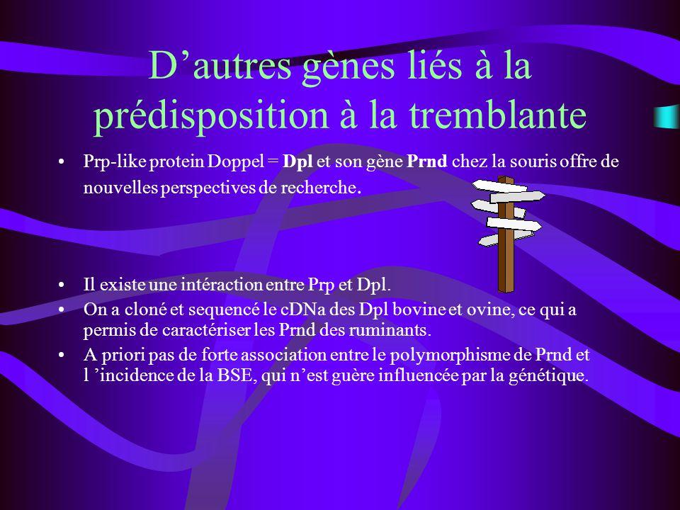 Dautres gènes liés à la prédisposition à la tremblante Prp-like protein Doppel = Dpl et son gène Prnd chez la souris offre de nouvelles perspectives d