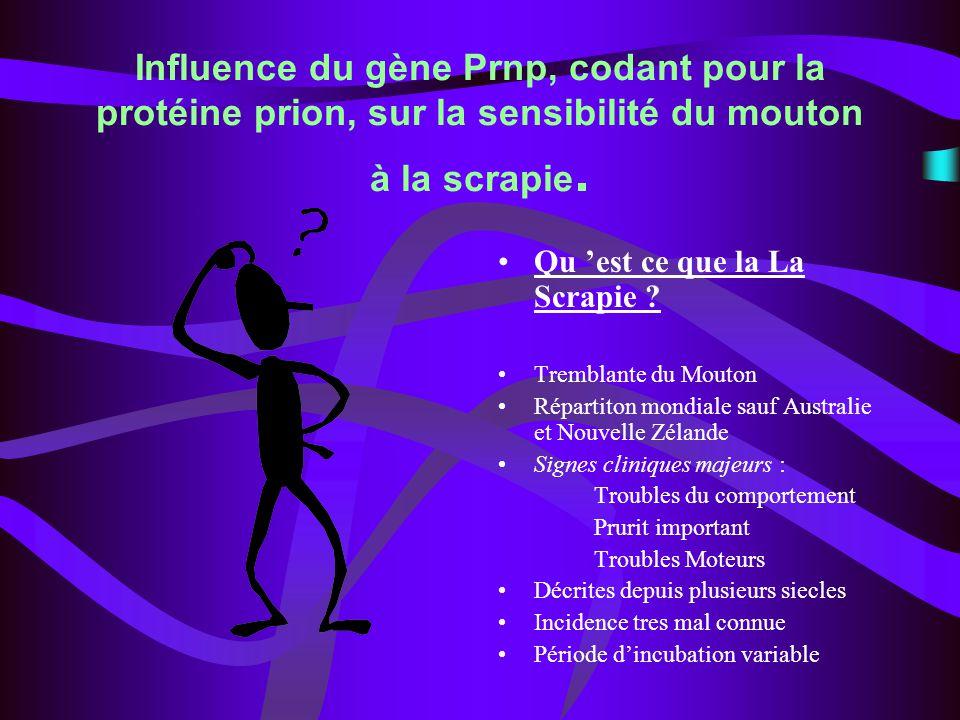 Influence du gène Prnp, codant pour la protéine prion, sur la sensibilité du mouton à la scrapie. Qu est ce que la La Scrapie ? Tremblante du Mouton R