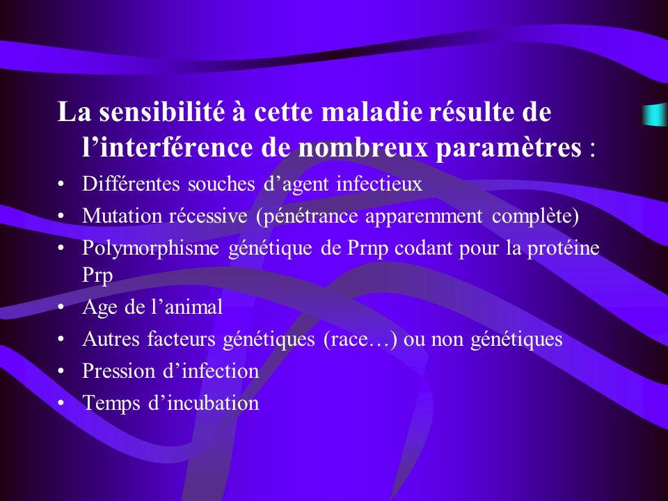 Conclusion Influence de lâge pour le développement de la maladie en corrélation avec le temps dincubation et le polymorphisme de Prnp.