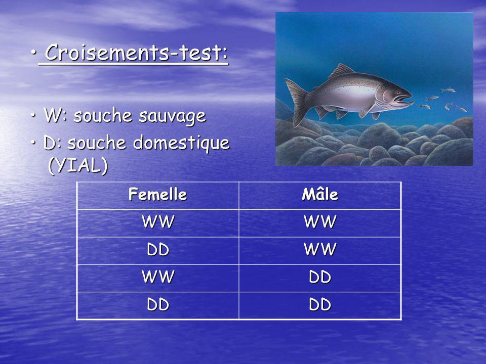 H.A.I.(évaluation de létat de santé): 91,2% des saumons ont un score de 0 Taux de survie: DD 92,4% ; DW et WD taux intermediaires par rapport aux lignés pures.