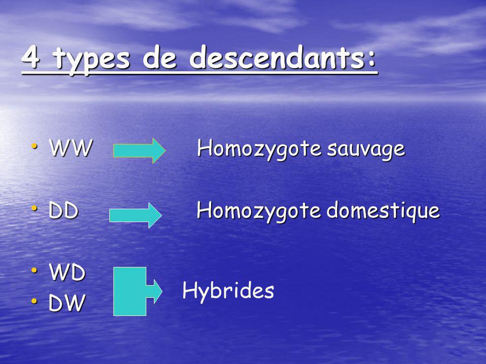 Croisements-test: Croisements-test: W: souche sauvage W: souche sauvage D: souche domestique (YIAL) D: souche domestique (YIAL) FemelleMâleWWWW DDWW W