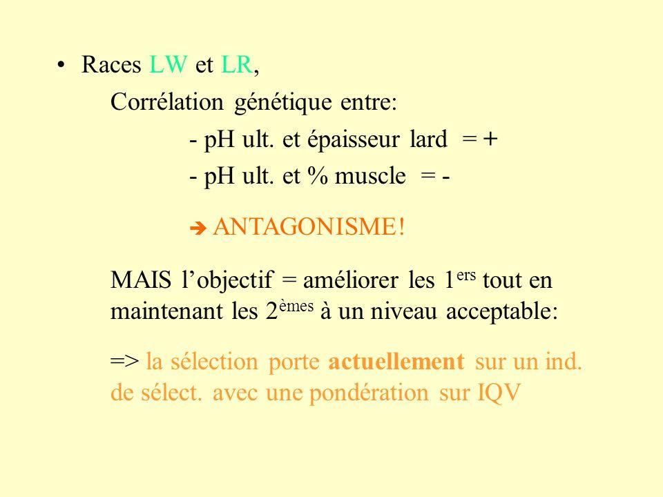 Races LW et LR, Corrélation génétique entre: - pH ult. et épaisseur lard = + - pH ult. et % muscle = - MAIS lobjectif = améliorer les 1 ers tout en ma