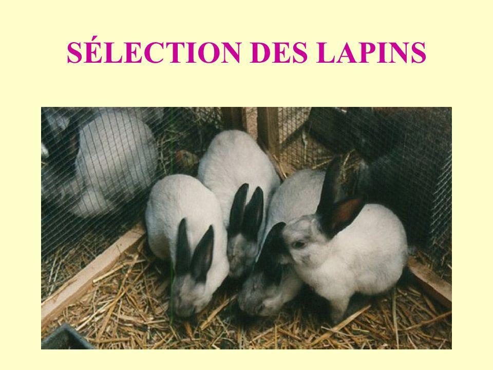 SÉLECTION DES LAPINS