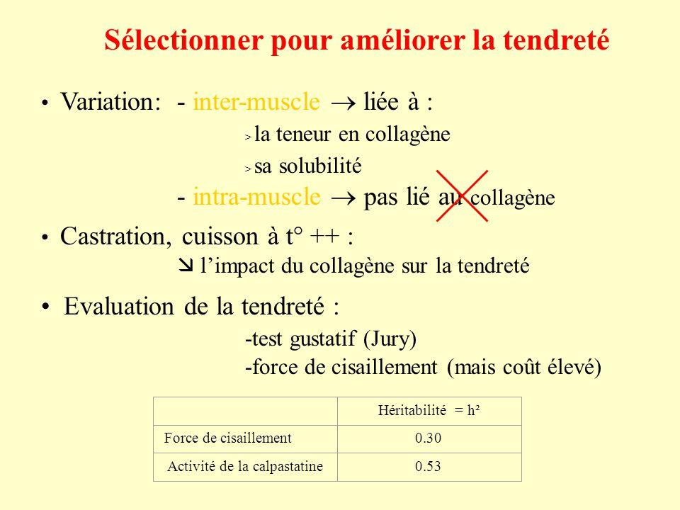 Sélectionner pour améliorer la tendreté Variation:- inter-muscle liée à : > la teneur en collagène > sa solubilité - intra-muscle pas lié au collagène Castration, cuisson à t° ++ : limpact du collagène sur la tendreté Evaluation de la tendreté : -test gustatif (Jury) -force de cisaillement (mais coût élevé) Héritabilité = h² Force de cisaillement0.30 Activité de la calpastatine0.53