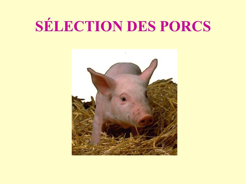 SÉLECTION DES PORCS