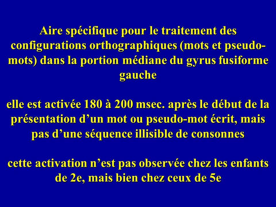 Aire spécifique pour le traitement des configurations orthographiques (mots et pseudo- mots) dans la portion médiane du gyrus fusiforme gauche elle es