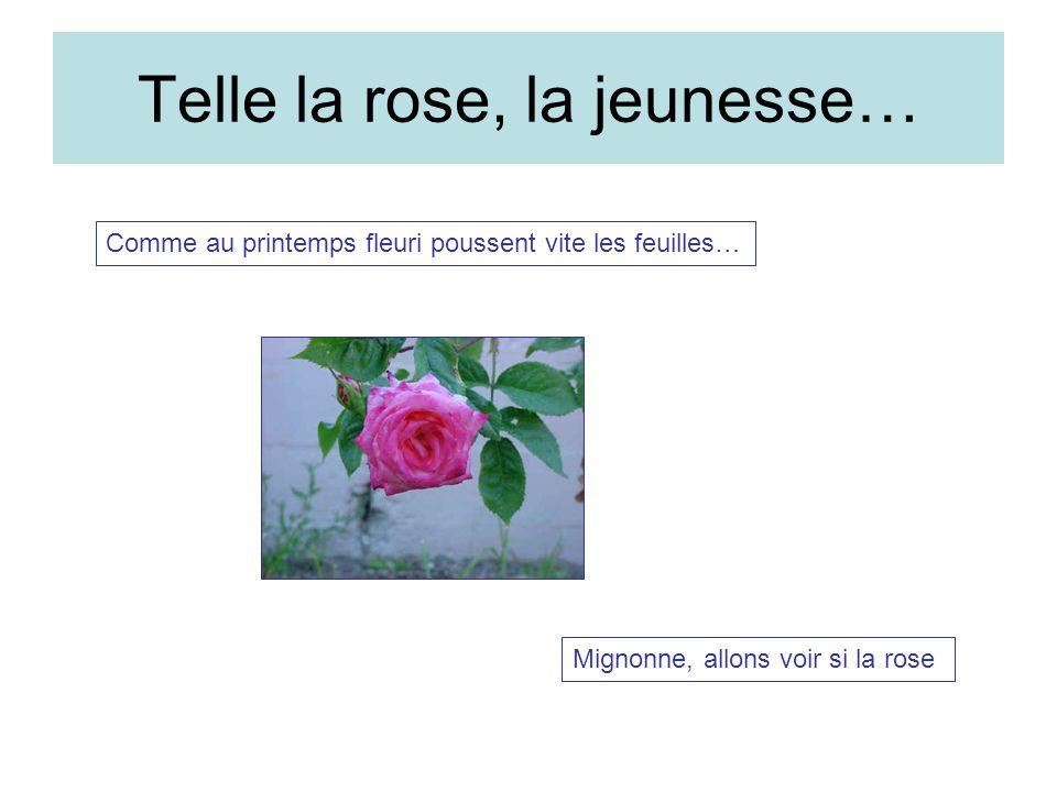 Telle la rose, la jeunesse… Comme au printemps fleuri poussent vite les feuilles… Mignonne, allons voir si la rose