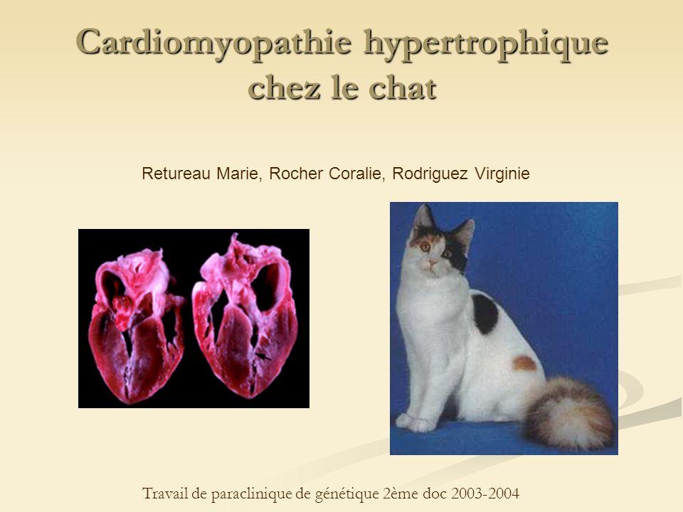 Cardiomyopathie hypertrophique chez le chat Retureau Marie, Rocher Coralie, Rodriguez Virginie Travail de paraclinique de génétique 2ème doc 2003-2004