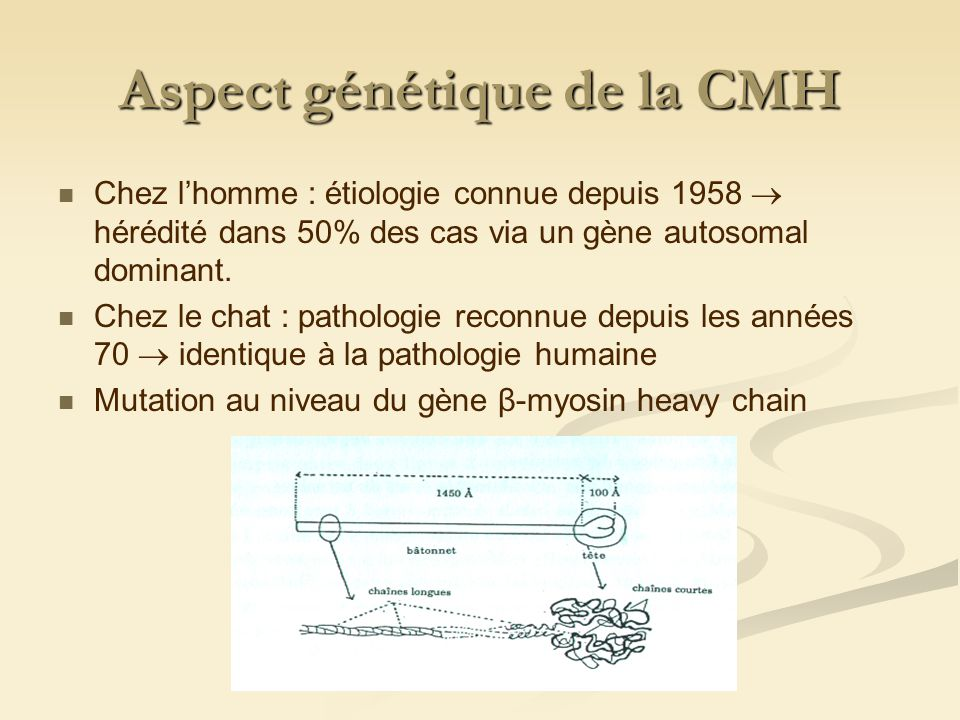 Aspect génétique de la CMH Mutations liées à la CMH : Gène β-myosin heavy chain Gène α-myosin heavy chain Gène α-tropomyosine Gène troponine T cardiaque Gène myosine binding protéine Mais lorigine génétique ne suffit pas à expliquer dautres modifications de structures rencontrées.