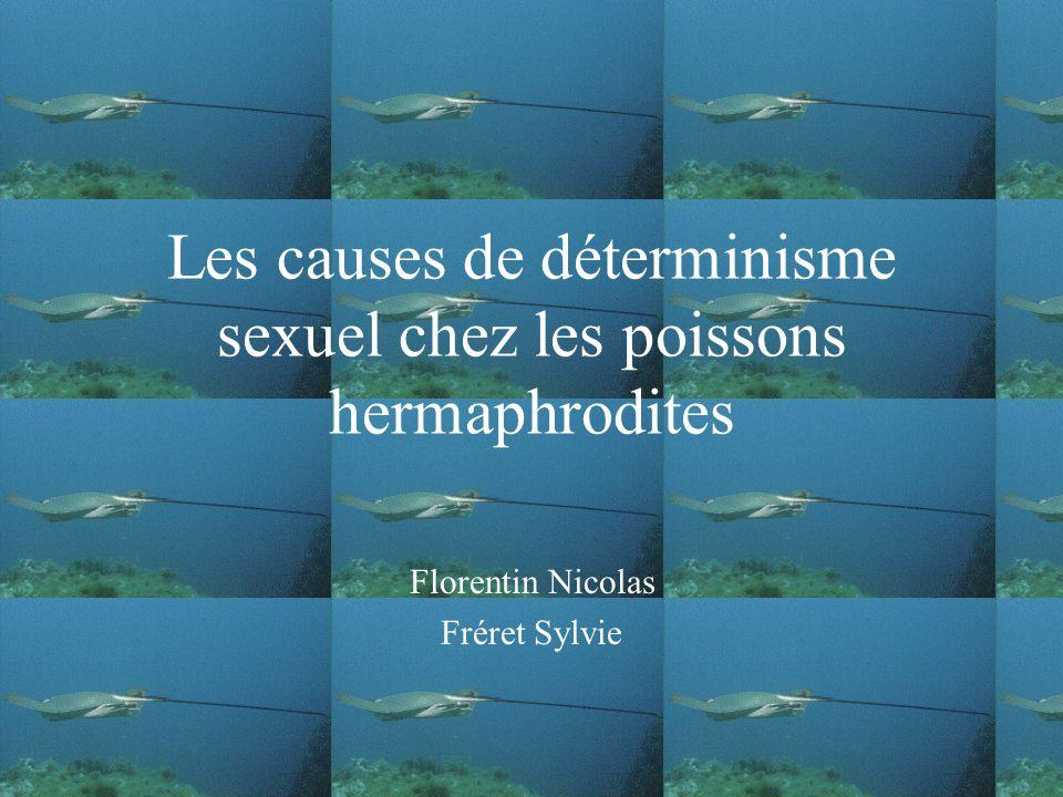 Les causes de déterminisme sexuel chez les poissons hermaphrodites Florentin Nicolas Fréret Sylvie
