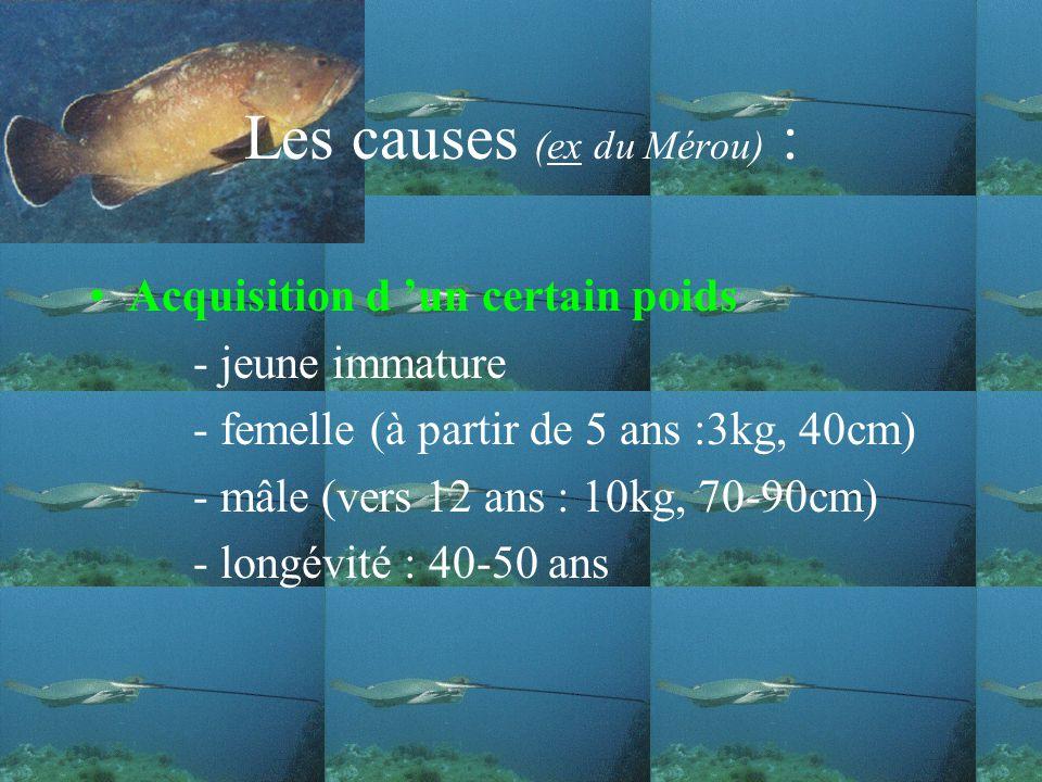 Les causes (ex du Mérou) : Acquisition d un certain poids - jeune immature - femelle (à partir de 5 ans :3kg, 40cm) - mâle (vers 12 ans : 10kg, 70-90cm) - longévité : 40-50 ans